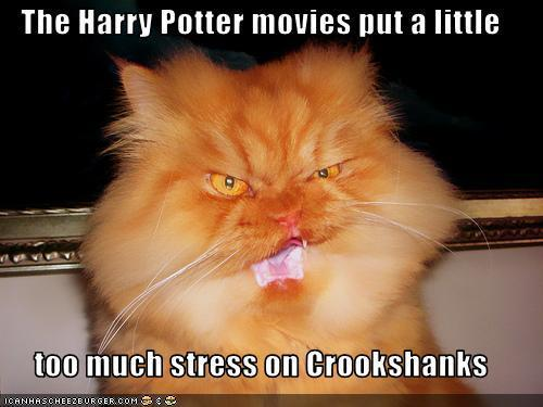 Poor Crookshanks :)