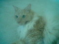 my other cat he has been abused once not by me but he is fine it was like 4 years ago - against-animal-cruelty photo