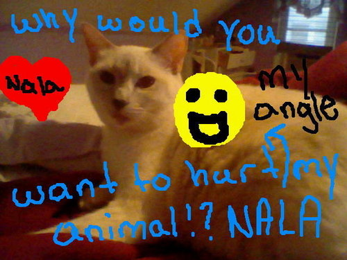 this is my cat nala she has not been abused but i wanted to show u her ok