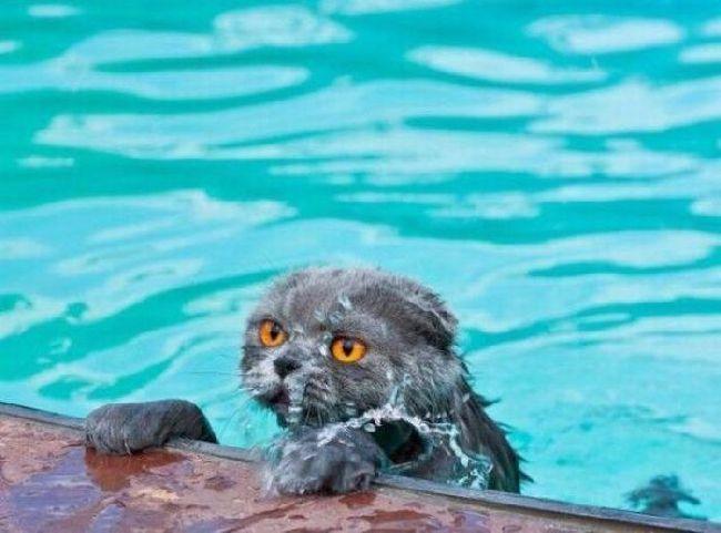 wet Кошки :))