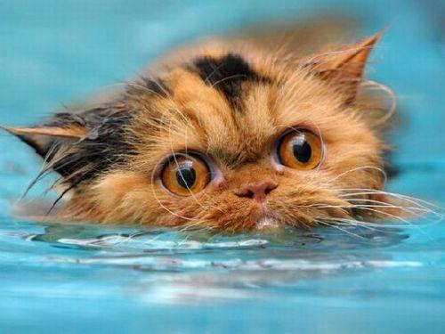 wet cats :))