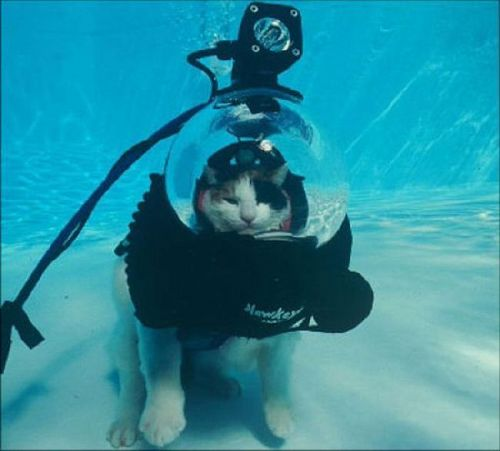 wet Kucing :))
