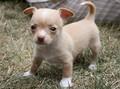 Baby Tiny