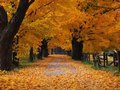 Beautiful Fall mga wolpeyper