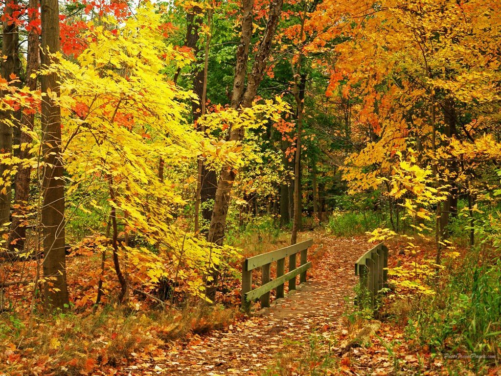 Beautiful Fall Wallpapers