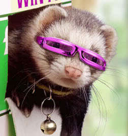 ferret with glasses!
