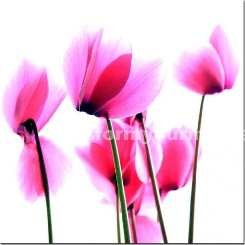 Flowers ♥'