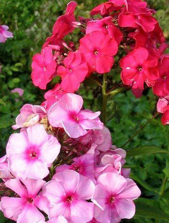 お花 ♥'