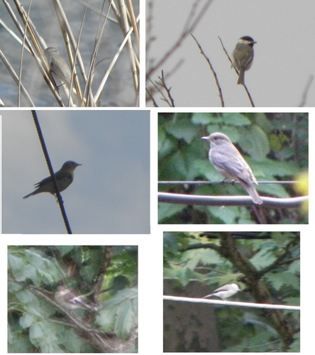 I took these Fotos (in Greece) but I don't know the species!!! Please help me!!!