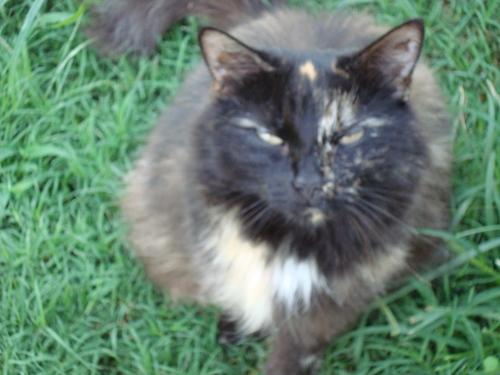 My cat Tootsie