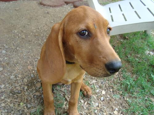My cachorro, filhote de cachorro Annie