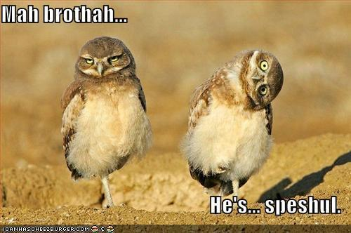 XD funny owls did i spell that right?