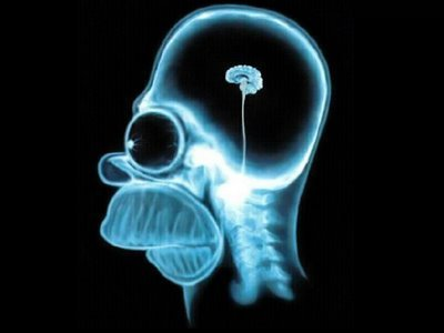 homer-s-brain-the-simpsons-15415662-400-