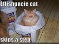 funny catz!