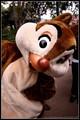 Disneyland Dale