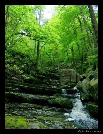 Photography wallpaper with a riparian forest and a beech entitled Landscapes