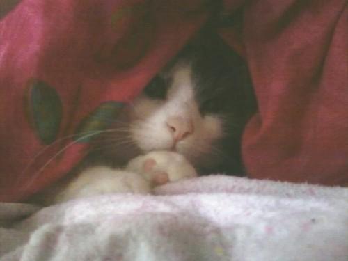 zaidi pics of my cute kitties