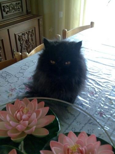 My Cat, Lucy <3