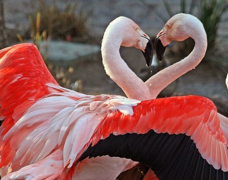 Animal tình yêu