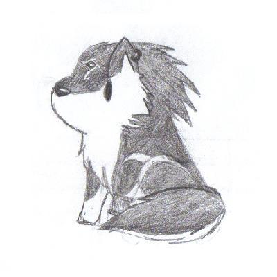 चीबी भेड़िया Link