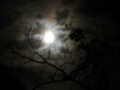 Full Moon - moon photo
