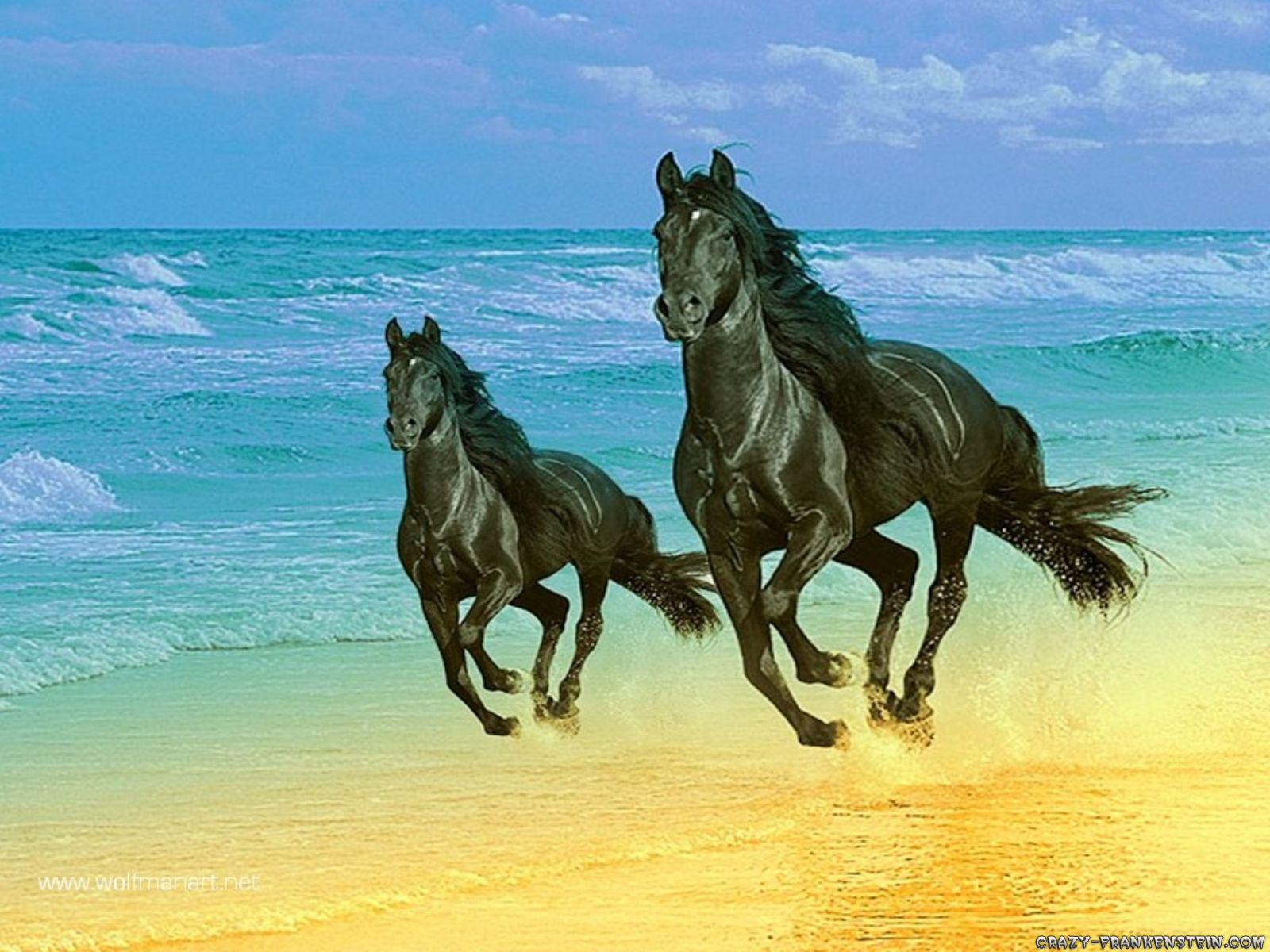 Horses More horse wallpapers!