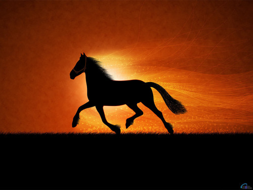 meer horse wallpapers!