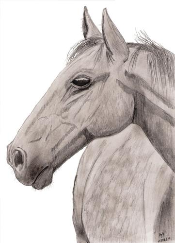 Thouroughbred Horse