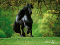horse kertas dinding