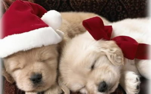 Puppies wallpaper titled Christmas Puppy