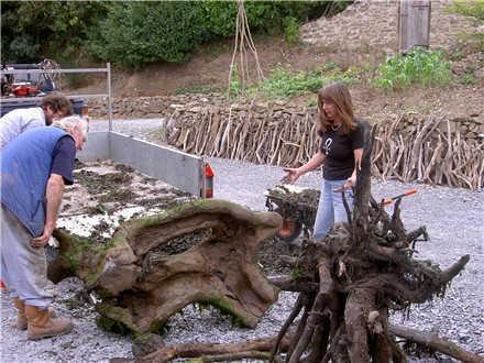 Driftwood cavalos