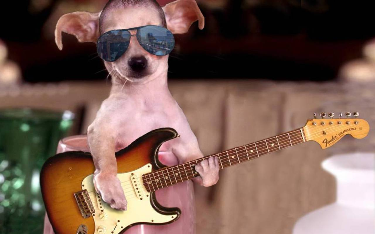 Funny Dogs with Guitars