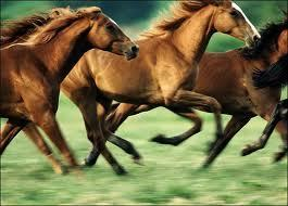 I प्यार HORSES!
