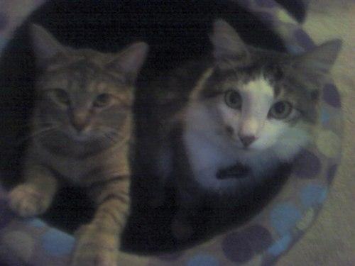 Nala and Milo