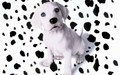 puppies - OH NO ...My spots have fell off !!! wallpaper