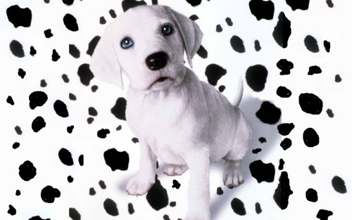 Puppies wallpaper entitled OH NO ...My spots have fell off !!!