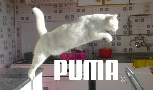 PUMA ファン FTW!!!