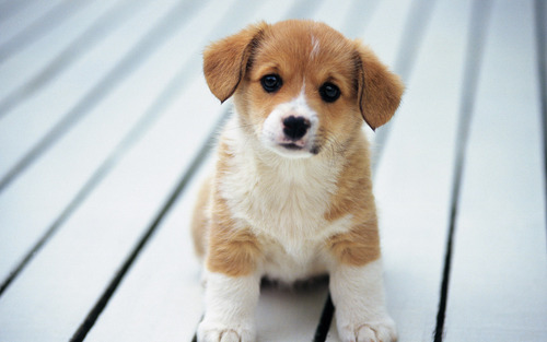 Puppies wallpaper entitled So Cute :)