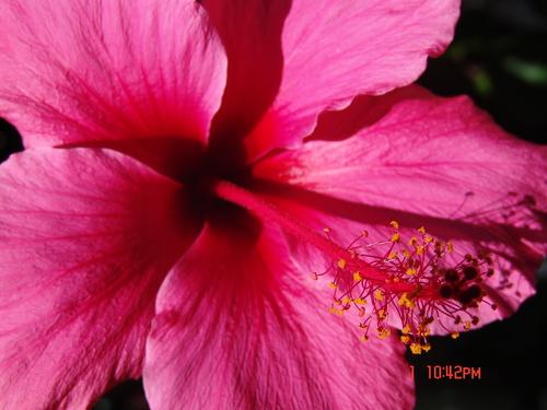 hawiian bunga