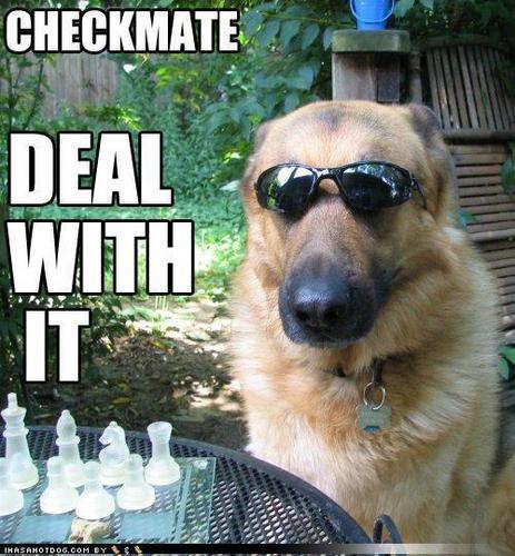 lol...dogs