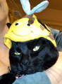 the fat cat with the bee hat