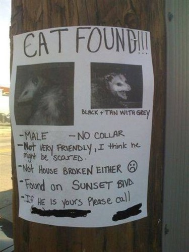 CAT FOUND ....wait a saat