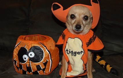Dressed and ready for halloween :)