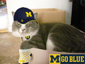 Gus - university-of-michigan photo