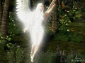 Morning Angel - angels wallpaper