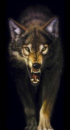 Wolves wallpaper entitled Snarling Wolf