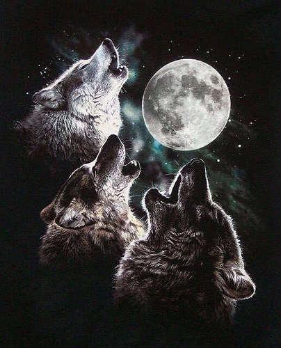 serigala and manusia serigala