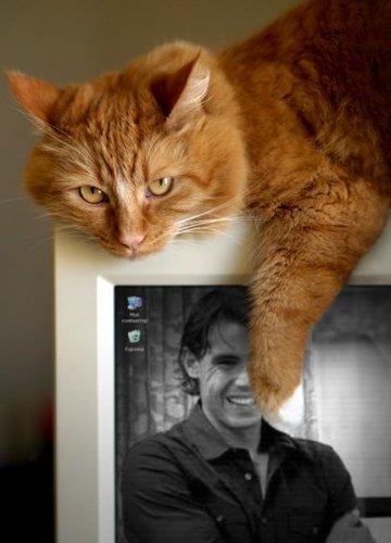 rafa and cat 2