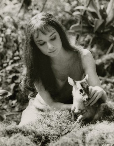 Audrey Hepburn  ♡ ♡ - audrey-hepburn Photo