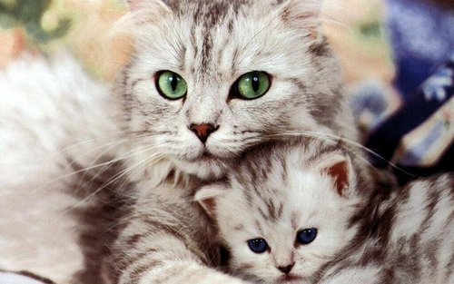 Beautiful Cat and Kitten - cats Wallpaper